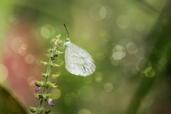 Butterfly with bokeh background Royalty Free Stock Photos