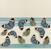 Butterfly border. Royalty Free Stock Images