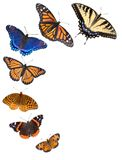 Butterfly border background. Seven different kinds of butterflies are arranged on a white background to make a border. From bottom to top are northern crescent Stock Images