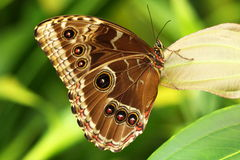 Butterfly. In botanic garder - Fata Morgana Prague Stock Photo