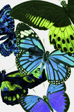 Butterfly Botanical. Spring botanical butterfly wallpaper design Royalty Free Stock Image