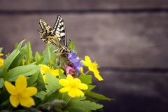 Butterfly and bouquet of field wild flowers in a vase on old boa. Rds Royalty Free Stock Photos