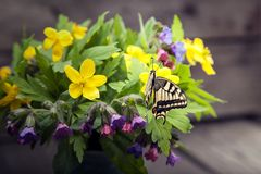 Butterfly and bouquet of field wild flowers in a vase on old boa. Rds Stock Images