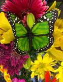 Butterfly bouquet Stock Image