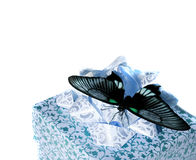 The butterfly on a box Royalty Free Stock Image