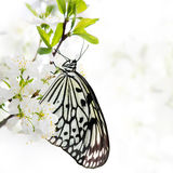 Butterfly on a branch. Stock Images