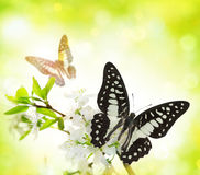 Butterfly on a branch. Stock Image