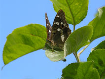 Butterfly on the branch of an Apple tree Stock Images