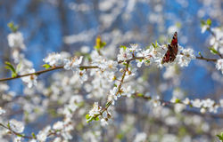 Butterfly on a branch Stock Photography