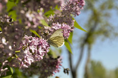Butterfly on a branch оf the serene Royalty Free Stock Image