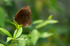 Butterfly on branch Stock Image