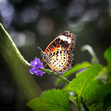Butterfly on the branch Stock Images