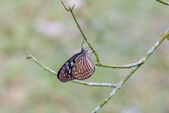 The butterfly on the branch of tree Royalty Free Stock Photos