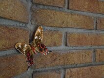 Butterfly on brick wall Royalty Free Stock Image