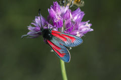 Butterfly with brightly by colored wings. Stock Photography