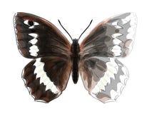 Butterfly Brintesia Circe. Royalty Free Stock Photography