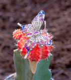 Butterfly brooch Royalty Free Stock Photos