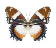Butterfly brown Stock Photography