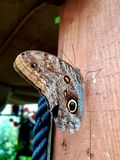 Butterfly. Brown butterfly sitting on a wooden wall in the garden royalty free stock photography