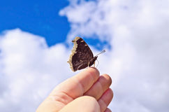 Butterfly brown on a hand against the sky Stock Photography