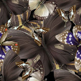 Butterfly 05 brown Stock Photos