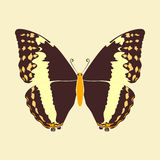Butterfly brown wing abstract on vintage color background Stock Photo
