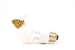 Butterfly on Bulb Stock Photos
