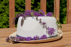 Butterfly bush blossom on summer hat at garden. Royalty Free Stock Image
