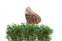 Butterfly on Bush Royalty Free Stock Photo