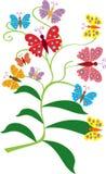 Butterfly bush Royalty Free Stock Photography