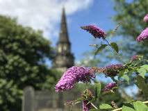 Butterfly bush with St Cuthbert`s Church at the background Stock Photos