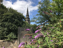 Butterfly bush with St Cuthbert`s Church at the background Stock Images