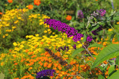 Butterfly bush and summer flowers Royalty Free Stock Image