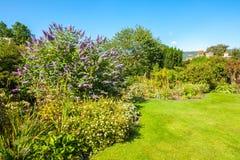 Butterfly bush, Violet butterfly bush, Summer lilac, Butterfly-bush, Orange eye , Buddleja davidii, Buddleia davidii Stock Images