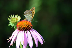 Butterfly Stock Photography