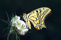 Butterfly. Butterflies fly natural wing life - stock Image Stock Photography