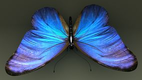 Butterfly. Butterflies are insects in the clade Rhopalocera from the order Lepidoptera, which also includes moths vector illustration