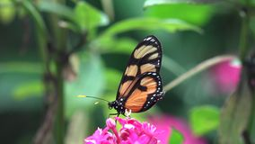 Butterfly, Butterflies, Insects, Flowers Royalty Free Stock Photos
