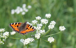 The butterfly. Butterfly on the flower. Spring and warm weather. Butterfly is feeding on the flowers Stock Image