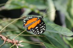 Butterfly. On flower in summer Royalty Free Stock Image