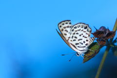 Butterfly, butterfly on the flowers. Royalty Free Stock Images