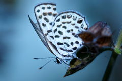 Butterfly, butterfly on the flowers. Stock Photos