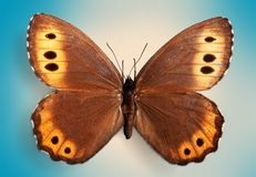 Butterfly. Insect wing blue collection monarch  animal royalty free stock images