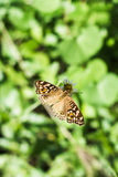 Butterfly. Buttery in backyard during the morning time royalty free stock image