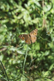 Butterfly. Buttery in backyard during the morning time royalty free stock photography