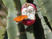Butterfly and Cacti Royalty Free Stock Image