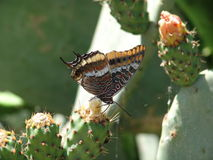 Butterfly & Cactus royalty free stock photos