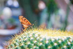 Butterfly on cactus Stock Image