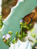 Butterfly with Cactus and Purple Flower in the Arizona Desert in Phoenix, USA royalty free stock photos
