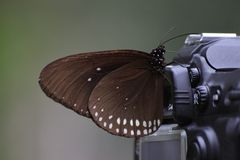 Butterfly on camera Royalty Free Stock Photography